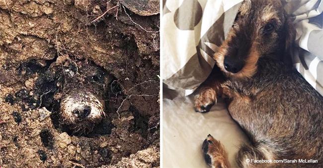 Perrito atrapado en una conejera por cinco días fue hallado con vida por su hermana