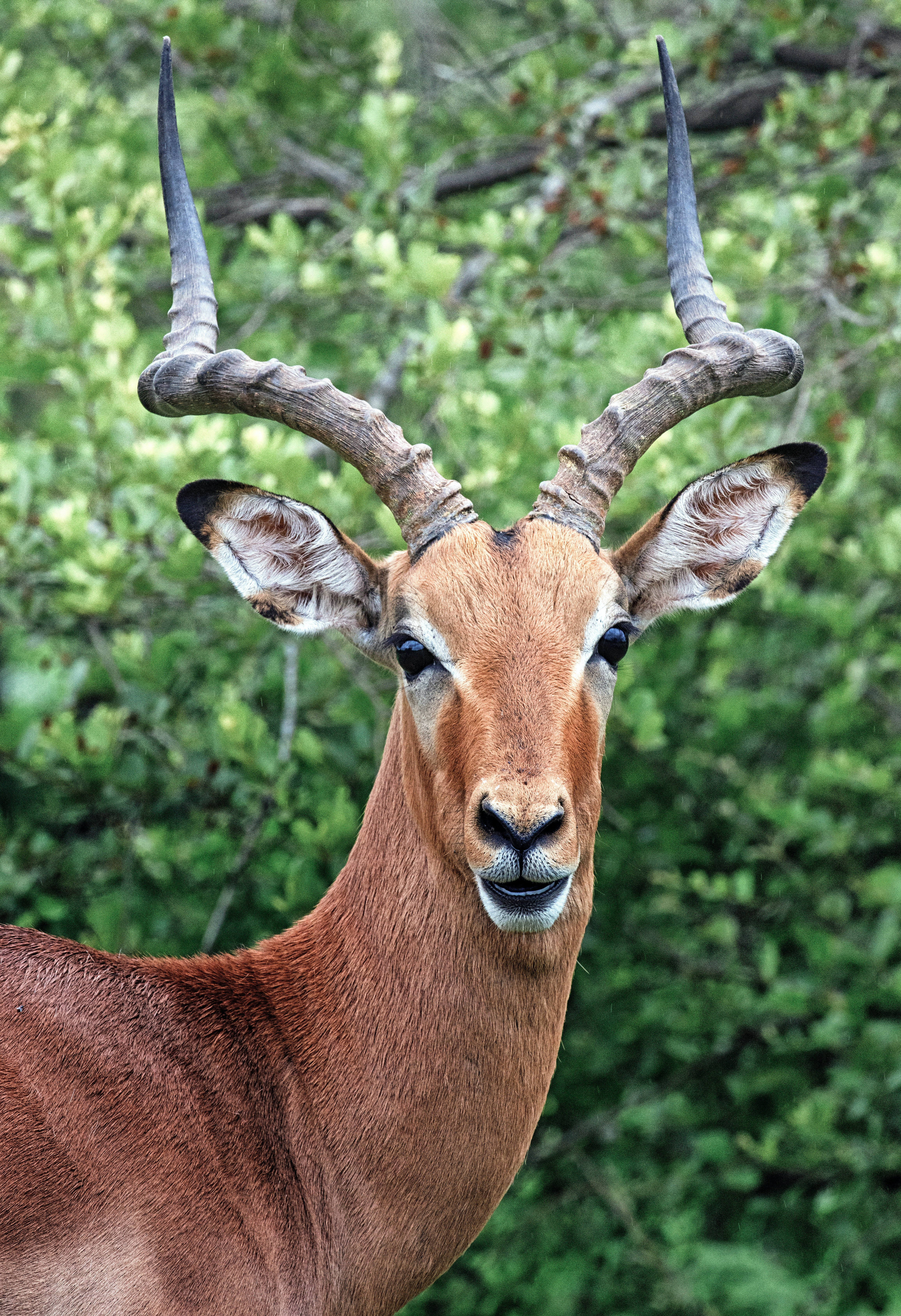 The zoo director asked one of the workers to dress as a deer to please the president's son.   Photo: Pexels