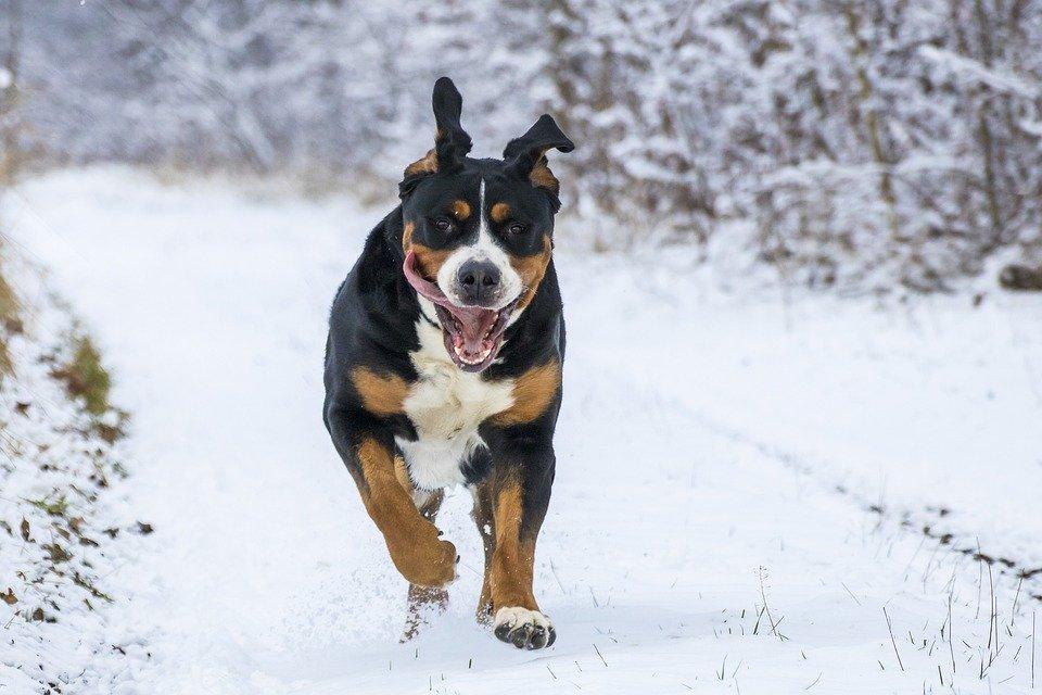 Un chien qui court dans la neige | Photo : Pixabay
