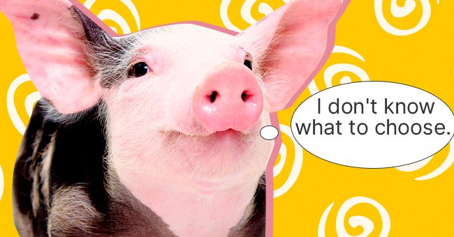 Daily Joke: Pigs Waiting for Their Turn to Be Characterized by God