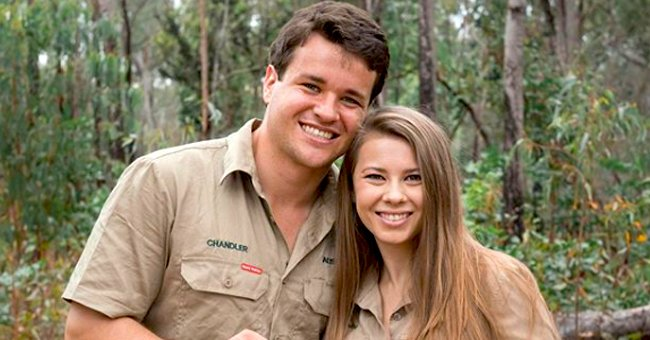 Pregnant Bindi Irwin Holds Cute Baby Echidna in Photo and Fans Cannot Stop Gushing