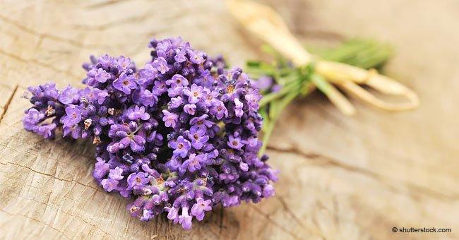 Las 10 mejores plantas para tu hogar que te traen suerte y buena salud