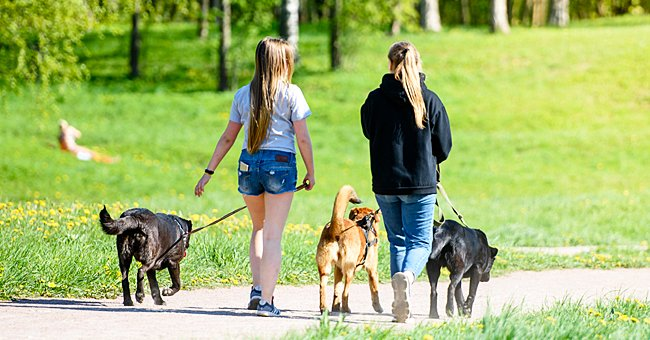 Daily Joke: Two Ladies Are Walking Their Dogs