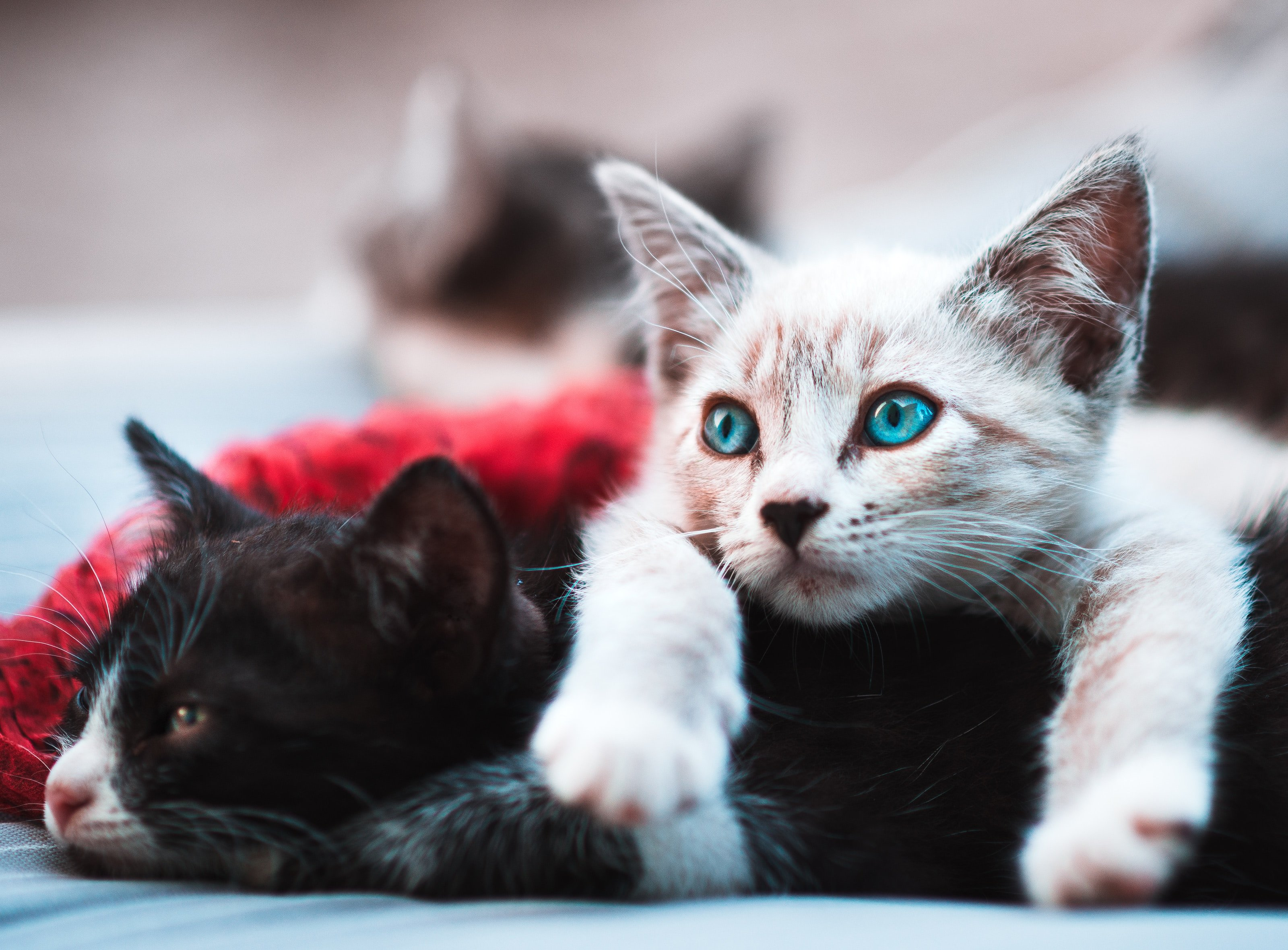 A couple of cats | | Source: Unsplash.com