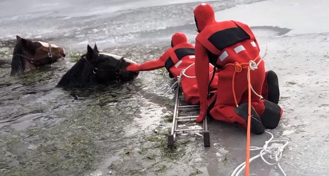 Rescuers begin to tie ropes around two horses — Wilhelm and Gunther — stuck in icy lake after breaking out of  farm | Photo: YouTube /  KETKnbc