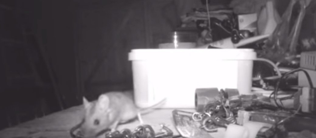 Mouse in Stephen's den | Photo: YouTube/World news for all