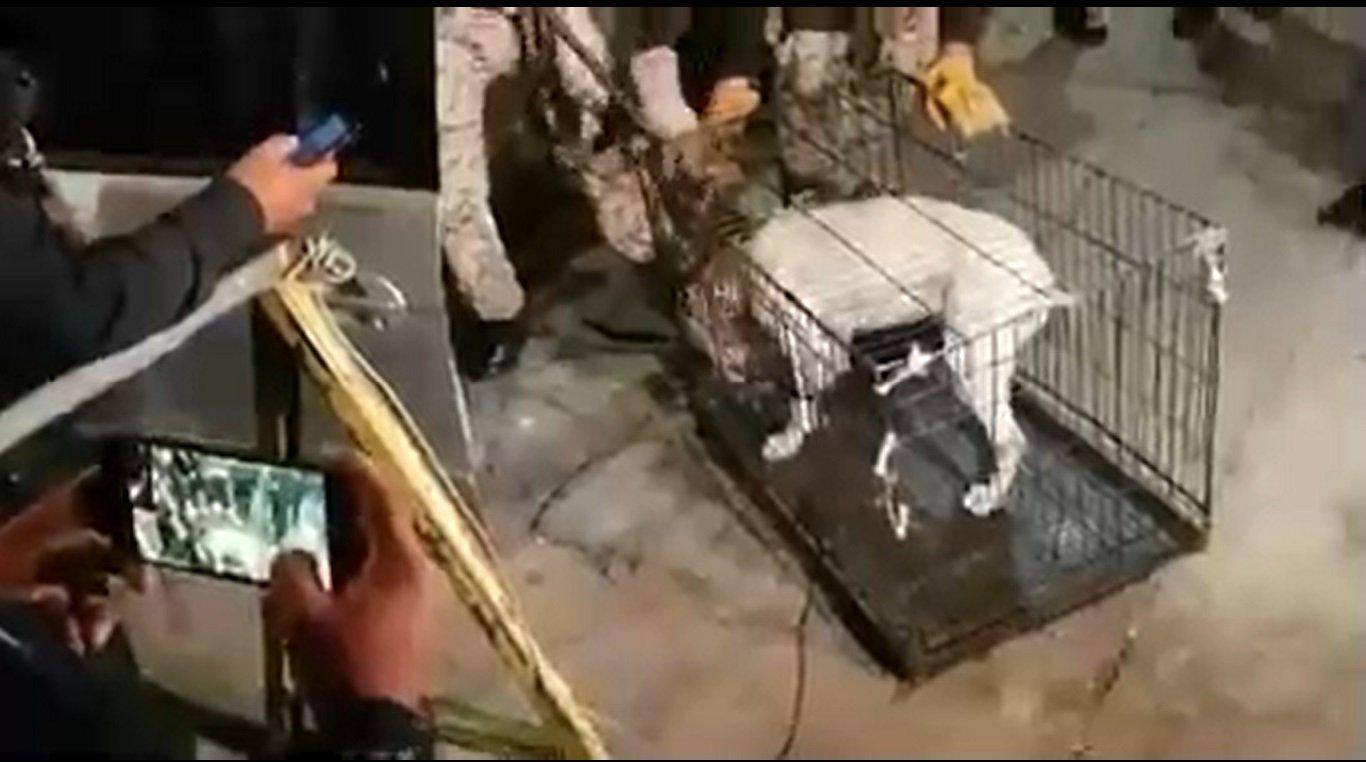 Rescate de perro.| Imagen tomada de: Twitter/SSP_CDMX