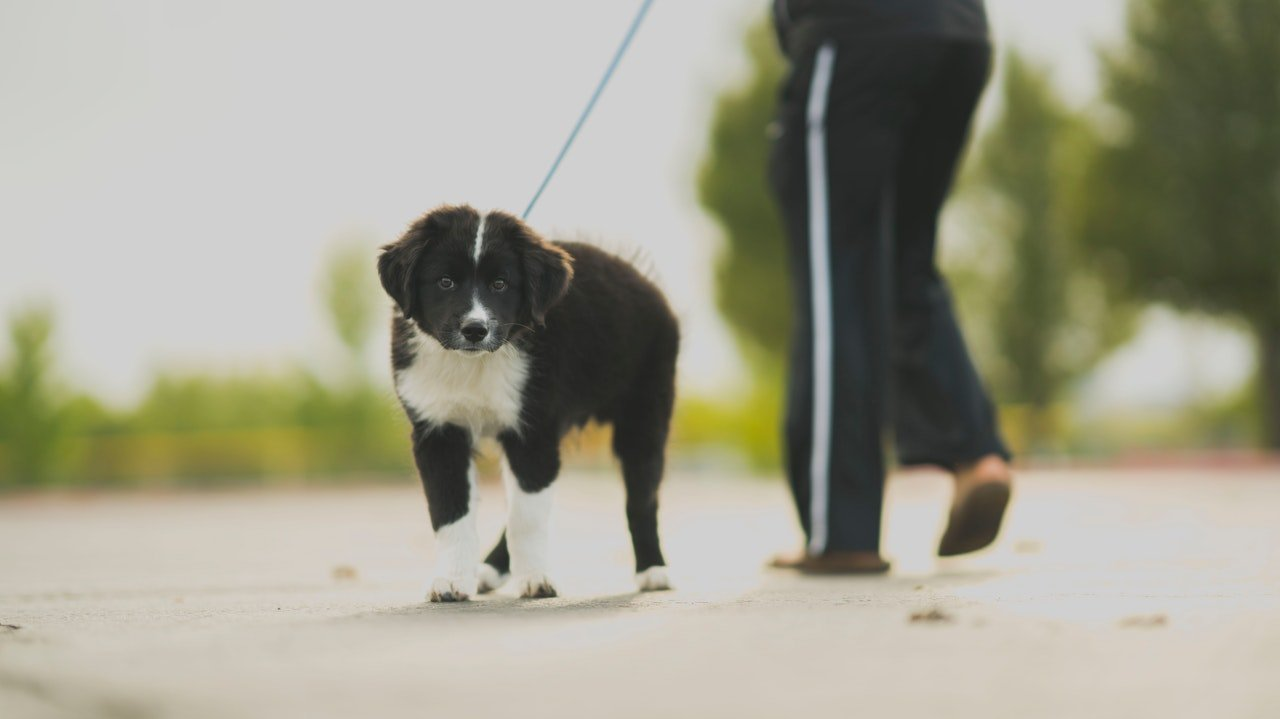Photo of a woman having a walk with her dog | Photo: Pexels