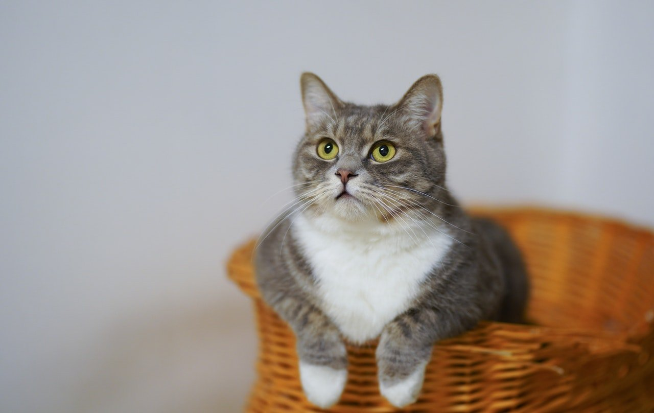 Photo of a cat in a basket   Photo: Pexels