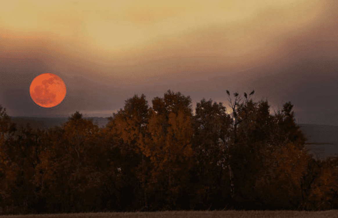Harvest Moon in Autumn rising over trees in a forest | Source: Getty Images
