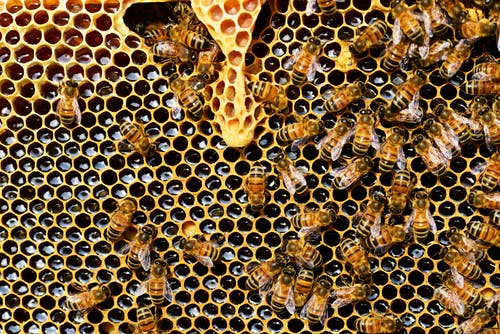 A photo of bees. | Photo: Pexel