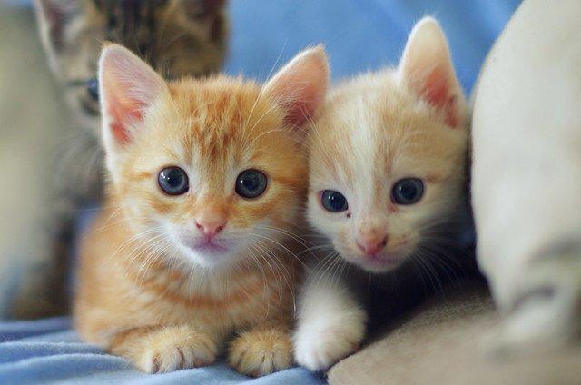Deux petits chatons. l Source: Flickr