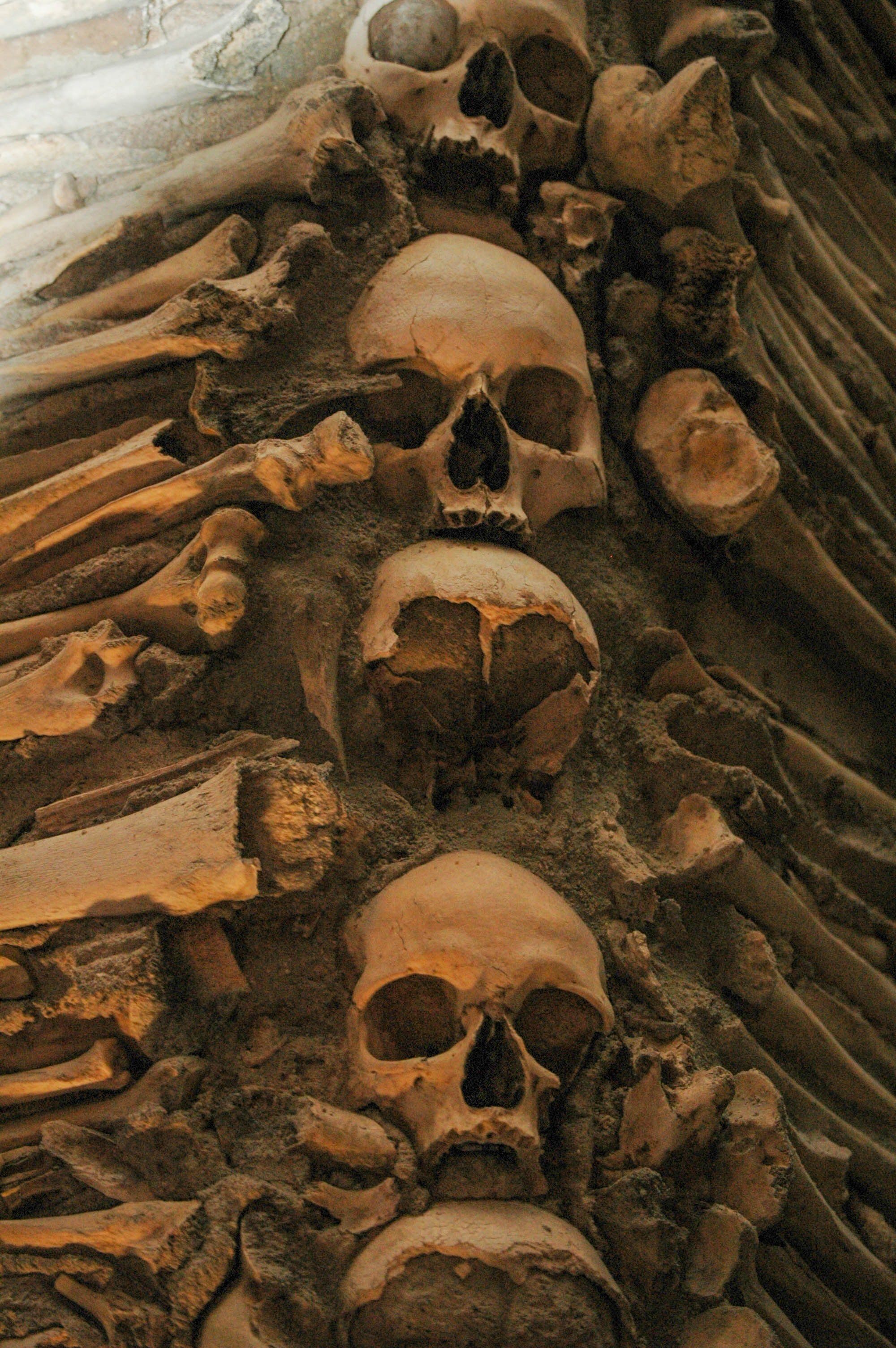 Pictured - A photo of human bones and skulls | Source: Pexels