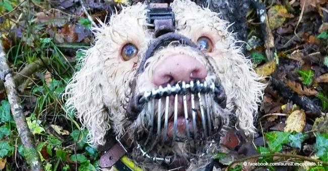 Un chien truffier maltraité provoque l'indignation en ligne