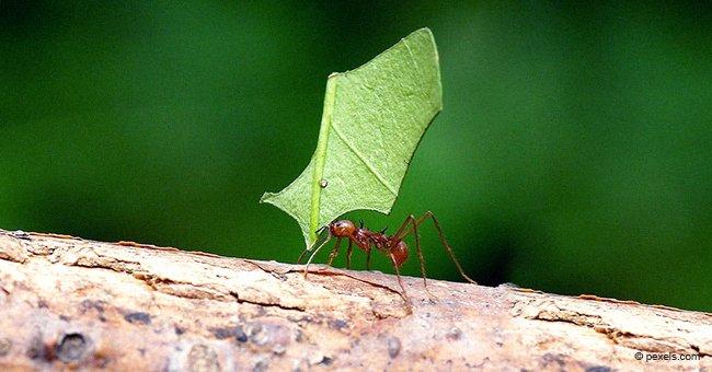 La petite fourmi travailleuse