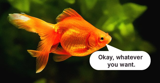Daily Joke: Goldfish Offers Three Men Wishes in Exchange for Not Eating Her