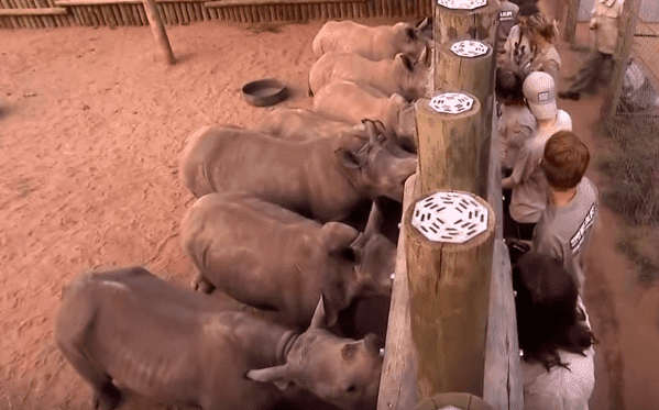Orphan rhinos being cared for at Kruger National Park   Photo: Sky News