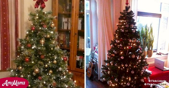 Here's why you should water your Christmas tree
