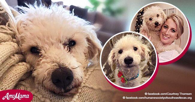 No había esperanza para perrito moribundo en refugio hasta que halló a alguien que lo amara