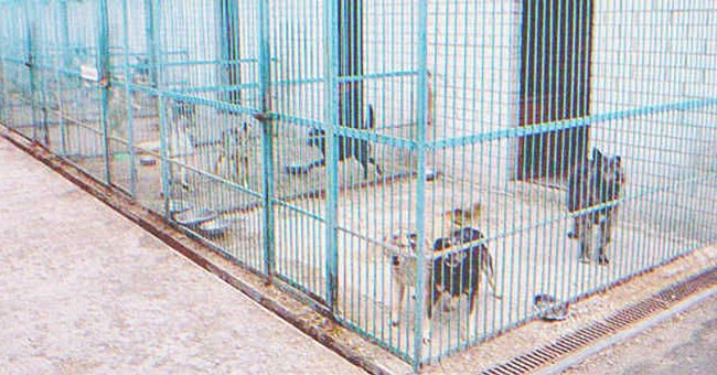 Several dogs in a cage. | Source: Shutterstock