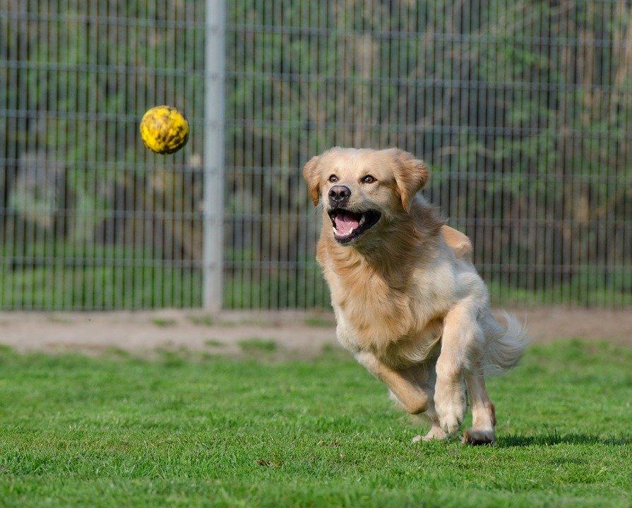 Perro jugando en el parque / Imagen tomada de: Pixabay