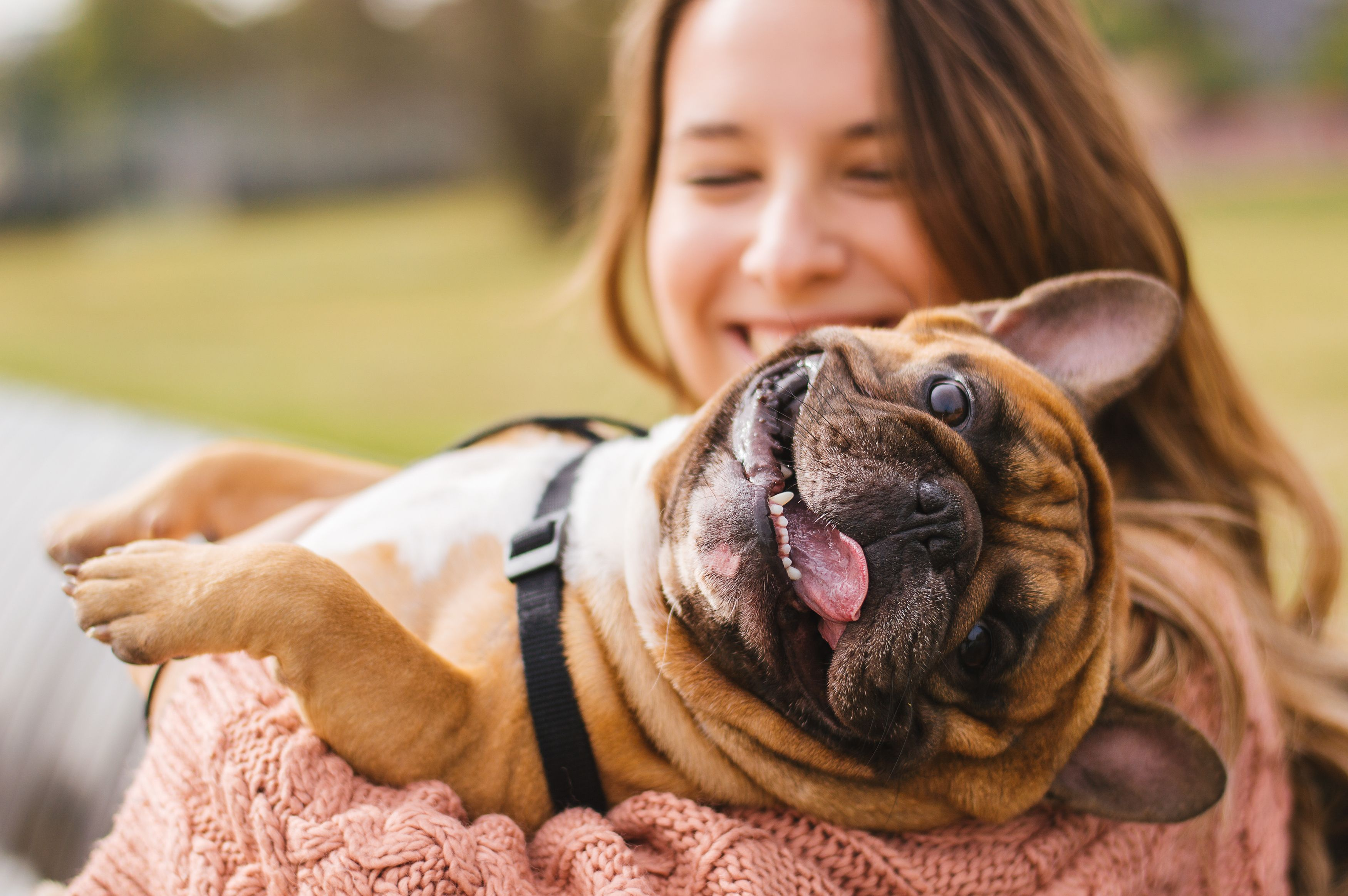 A happy dog captured in the hands of her owner.   Source: Shutterstock