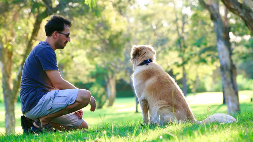Dog and its owner on a field | Photo: Shutterstock.com