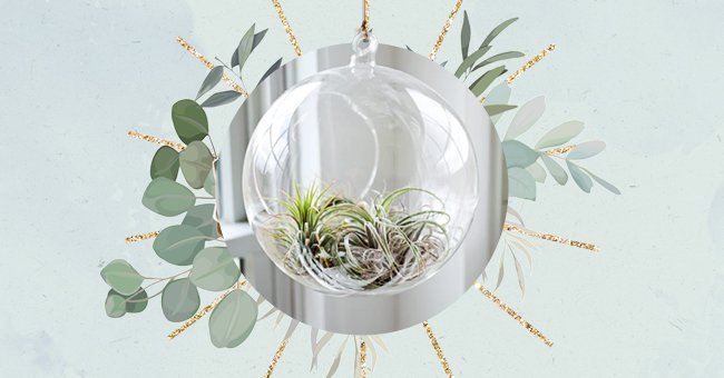 10 Hanging Plants To Add To Your Home