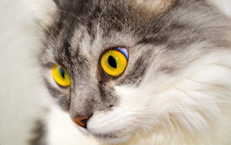 Gato| Foto: Pixabay