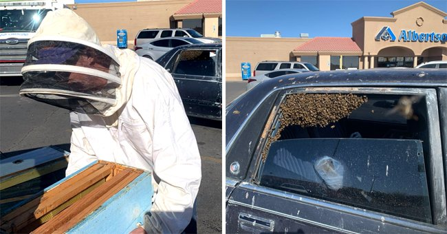 New Mexico Man's Car Is Occupied by about 15,000 Bees While He Went to the Grocery Store