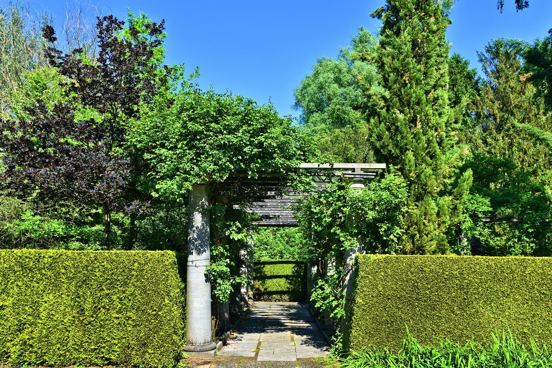 Pictured - A trimmed hedge   Source: Pixabay