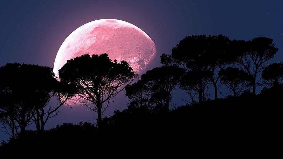 Lune Rose | Photo : Pixabay
