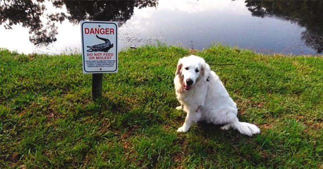 Osi the dog next to a sign warning people about alligators | Photo: ABC Action News