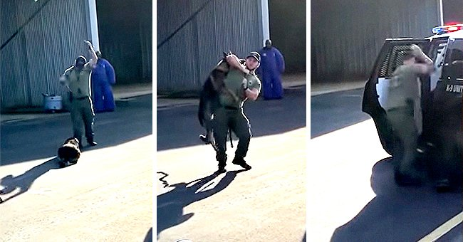 People Furious after Officer Seemingly Assaults K-9 Dog before Being Separated from the Animal