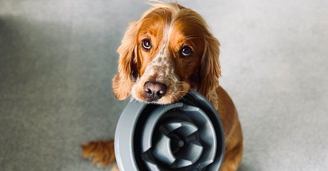 Neighbor Steals My Dog's Food [Story of the Day]
