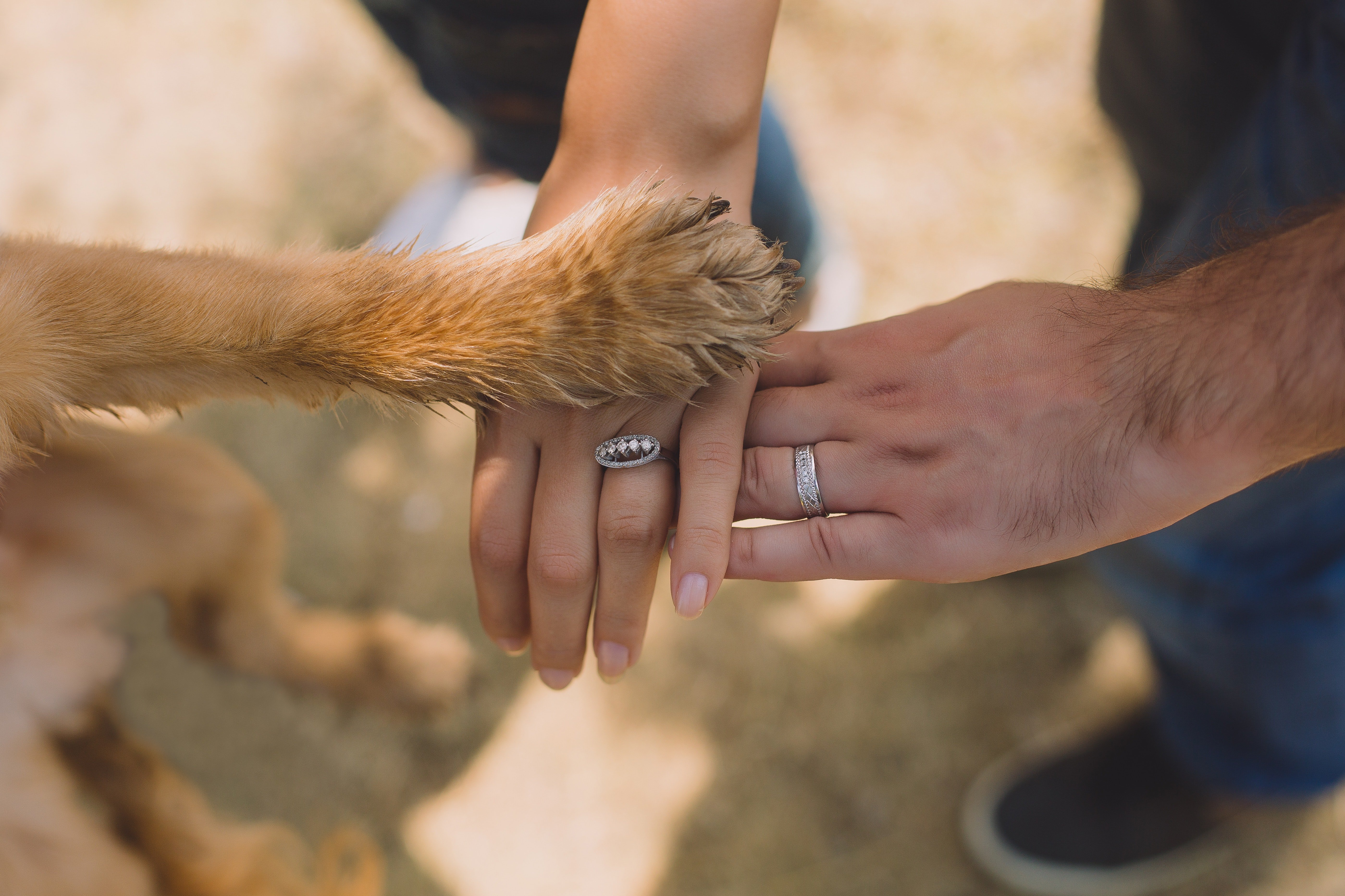 A dog's paw on top of a couple's hands | Source: Pexels.com