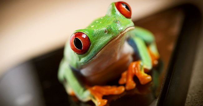 Daily Joke: Lonely Frog Telephones the Psychic Hotline to Ask About His Future