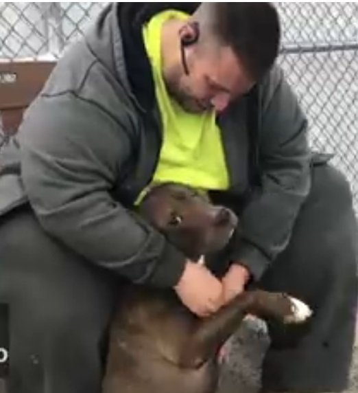 Finalement, Robert Allison a adopté le pit-bull. | Photo : Facebook/Animal Care Center of NYC