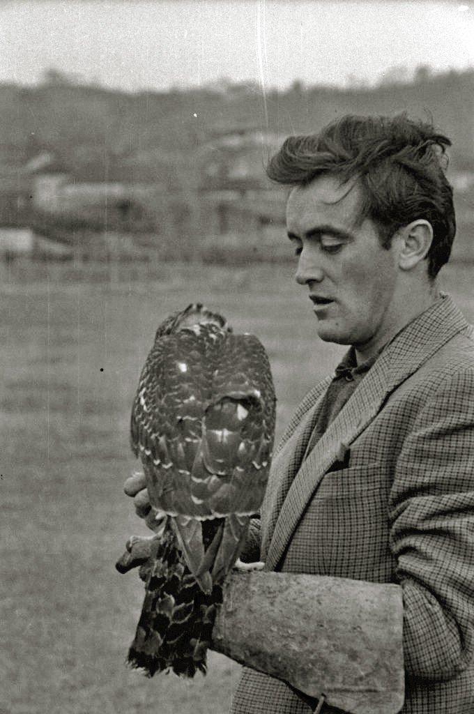 Félix Rodríguez de la Fuente también entrenaba halcones. | Foto: Wikimedia Commons