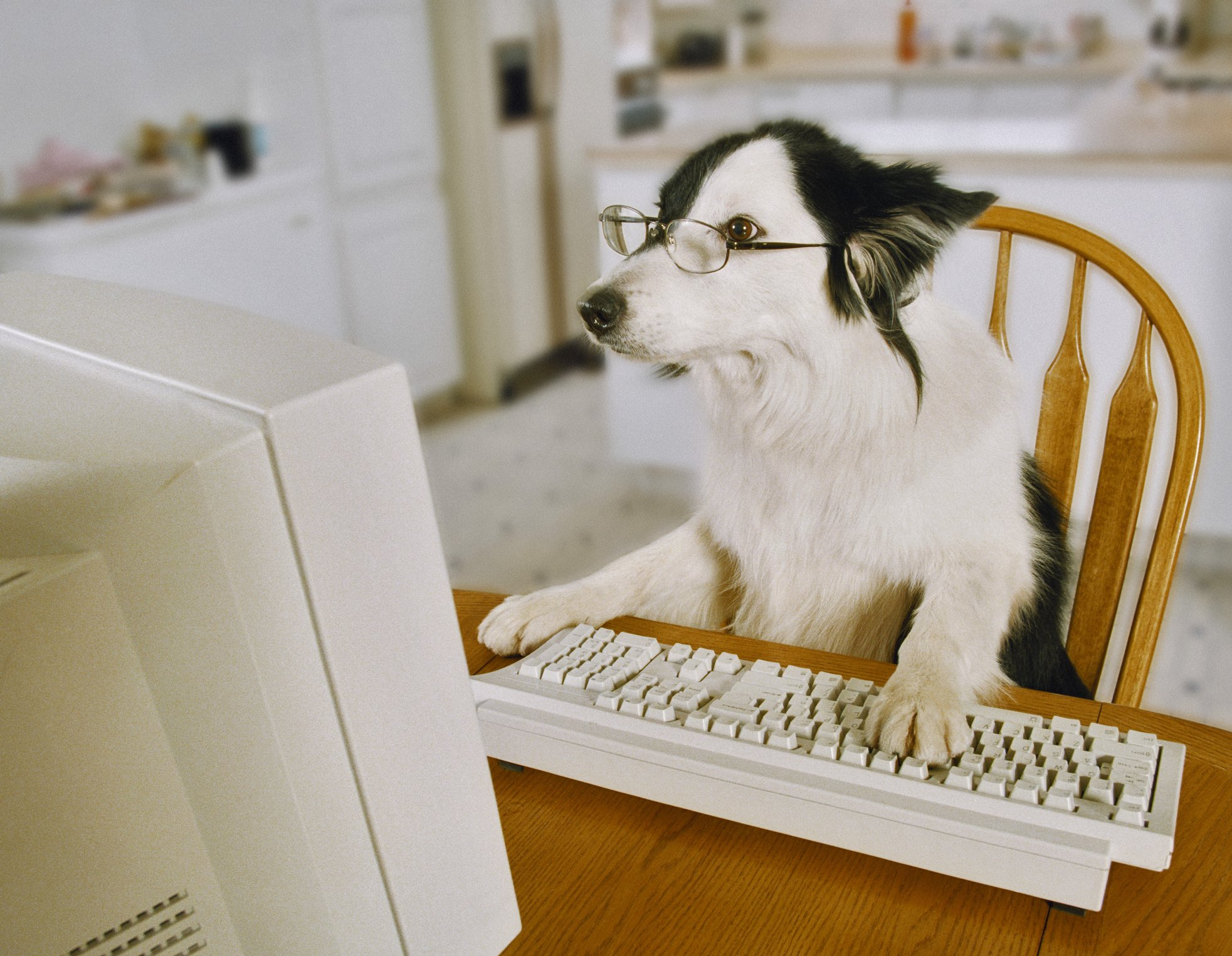 Border Collie Wearing Glasses Sitting at a Table With His Paw on a Keyboard. | Photo: Getty Images