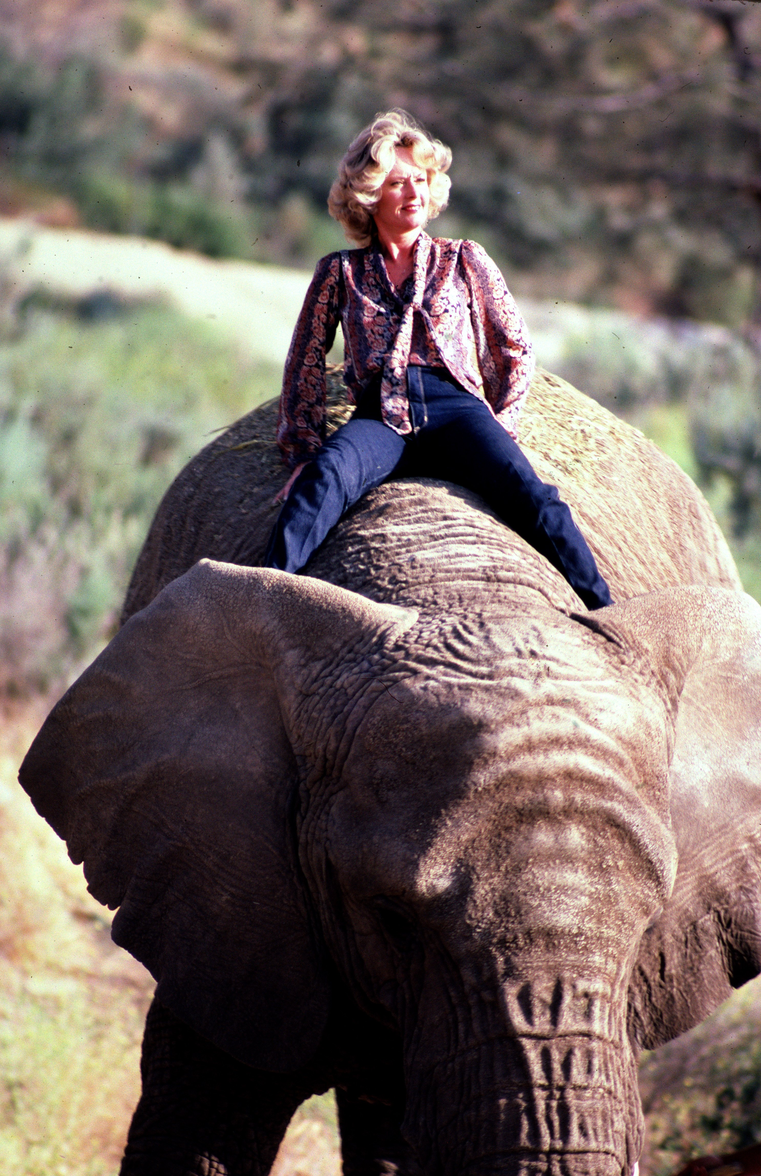 Actress Tippi Hedren, mother of Melanie Griffiths, star of the Alfred Hitchcock horror film The Birds sits astride an Elephant at her Saugus Animal reserve November 17, 1983 at a table in Saugus, California. | Source: Getty Images