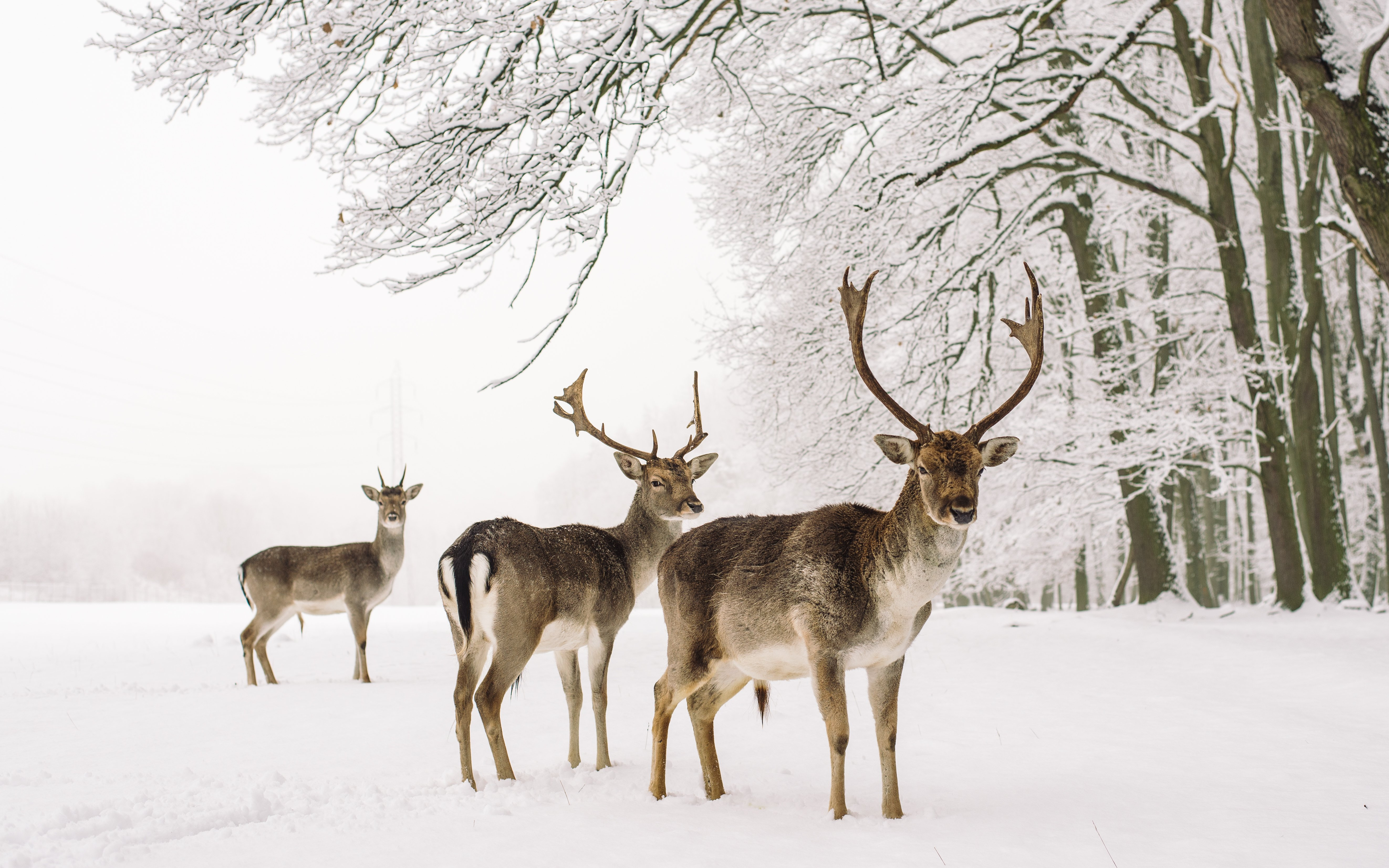 Some deer stand in the snow | Photo: Shutterstock