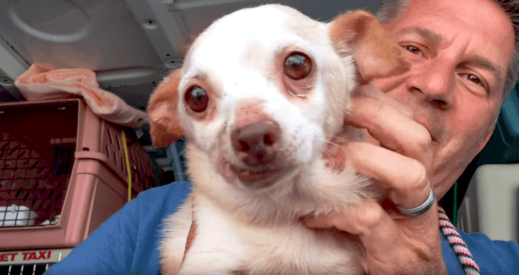 Source : Youtube / National Mill Dog Rescue
