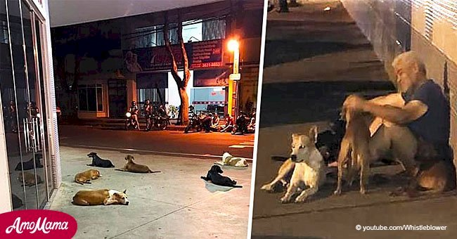 Six loyal dogs pursue an ambulance for miles after their homeless owner suffers a stroke