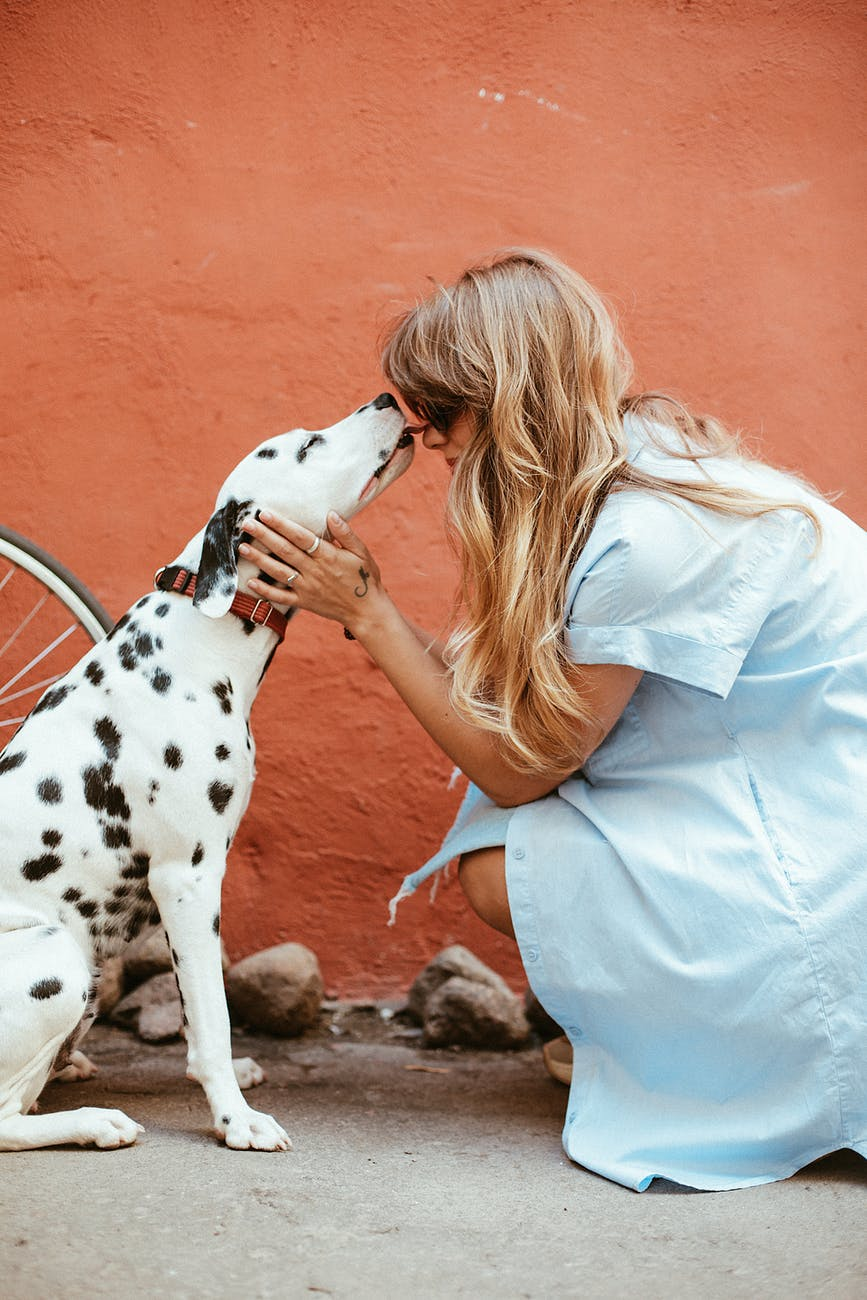 A canine visitor | Source: Pexels