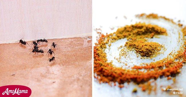 voici une pice qui pourrait vous aider vous d barrasser des fourmis pour toujours. Black Bedroom Furniture Sets. Home Design Ideas