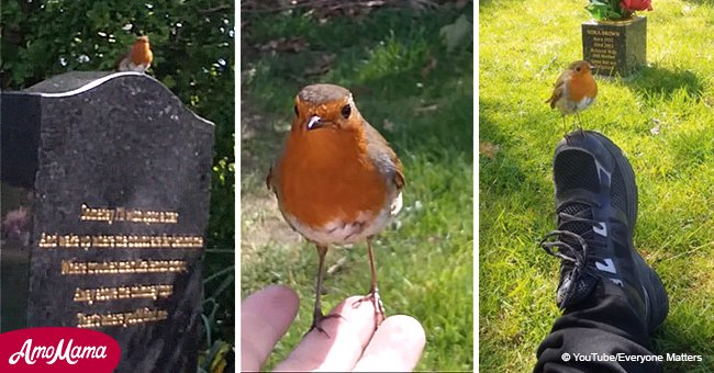 Touching moments robins comfort grieving relatives after their loved ones die