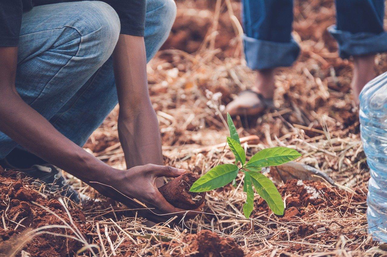 Un homme qui plante un arbre. | Photo : Pixabay