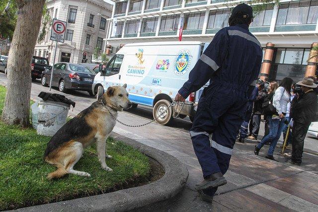 Rescate de un perro abandonado en la calle. | Foto: Flickr