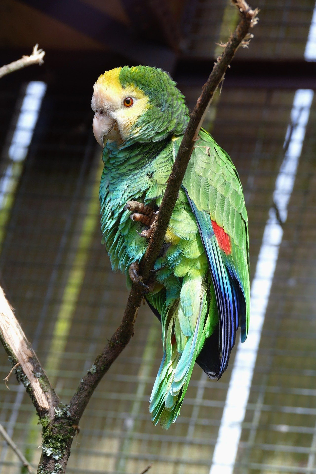 A beautiful parrot in a cage.   Photo: Pixabay/InspiredImages